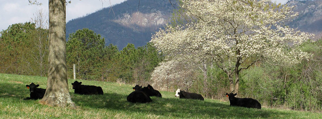 spring-steers-tree-mountain_1080x400